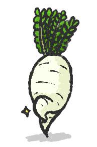 不定期美脚野菜